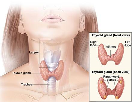Thyroid Dysfunction Treatment Brooklyn NY