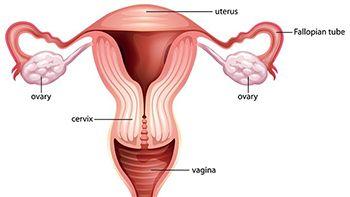 Amenorrhea Treatment - Best Gynecologists in Brooklyn NYC